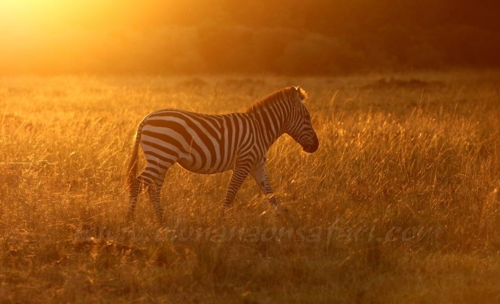Kenya Photography Safari (with Tin Man Lee)
