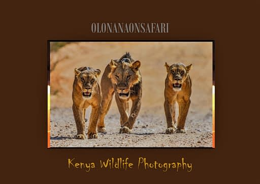 Kenya Wildlife Photography