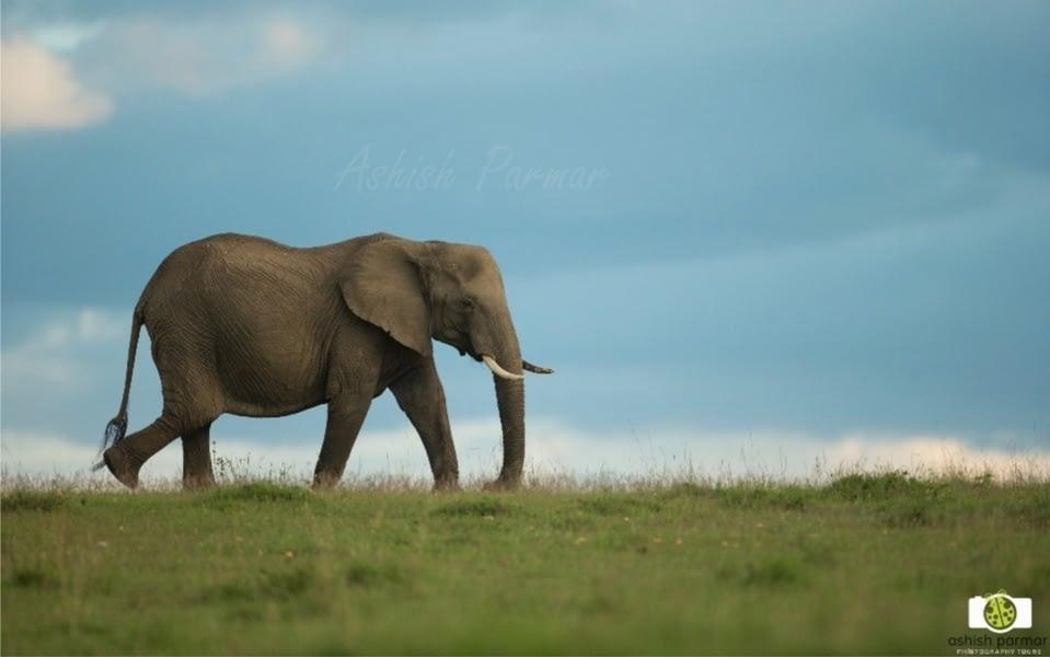 Masai Mara Photography Safari 2 n