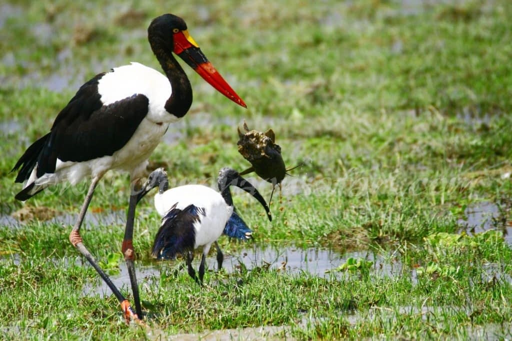 Kenya Forest Parks safari 34