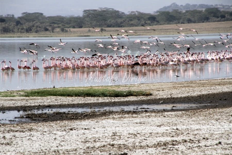 Lake Elementaita, Birds, Sleeping Warrior 1