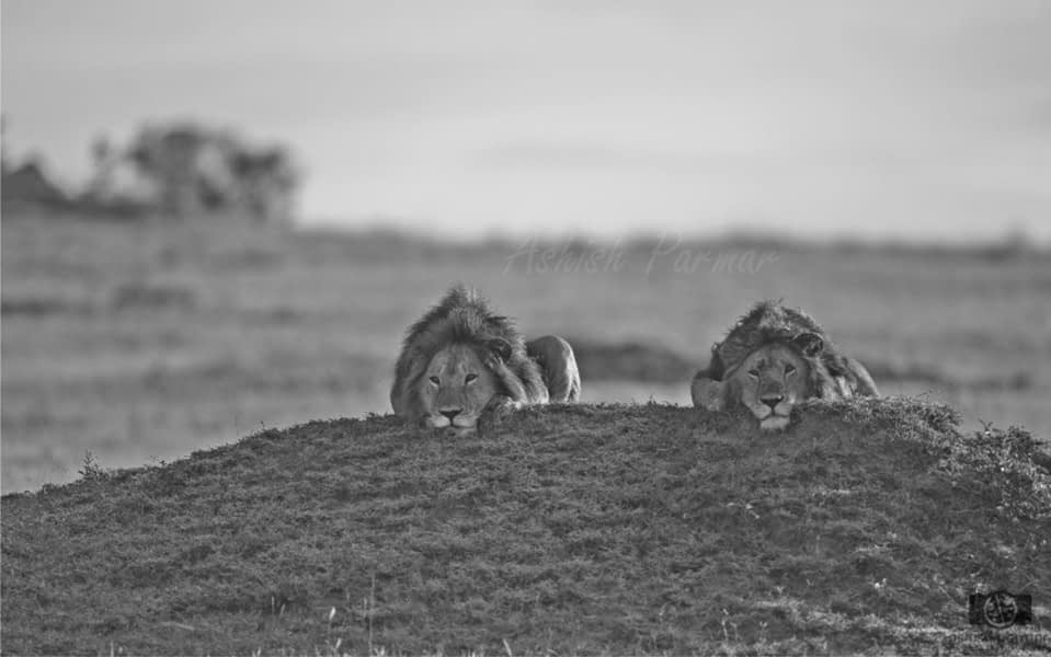 Masai Mara Photography Safari 2 f